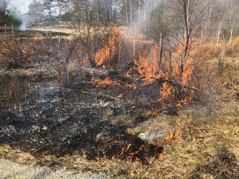 Det er enno stor brannfare i Kvinnherad. Her frå ein skogbrann tidlegare i vår. (Arkivfoto).