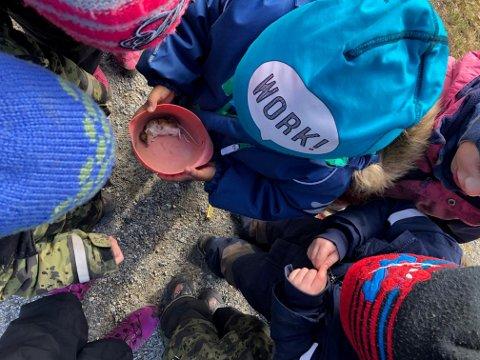 Barna i Undarheim barnehage syntest det var utruleg spennande å finna ei daud mus!