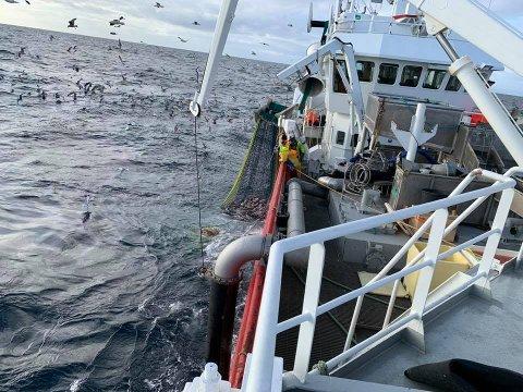Etter stor fiskelykke i Nord-Norge er M/S Tunfisk no på veg heim til Kvinnherad. No er situasjonen framover usikker også for fiskerinæringa.