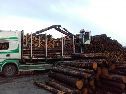 Årleg uttak av tømmer frå Børneset er på 25-30.000 kbm. (Foto: Uskedalen.no).