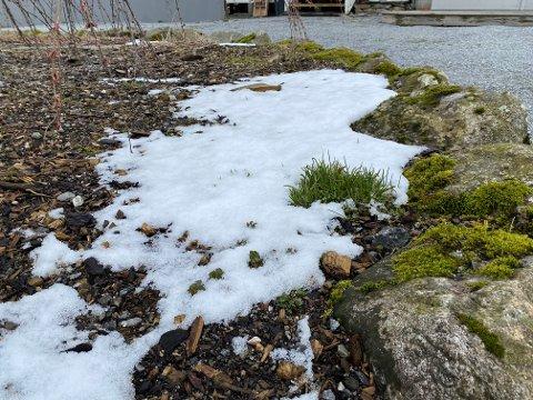 Litt snø i blomebeda er ikkje uvanleg i april, og torsdag kjem det monaleg med påfyll, skal vi tru Yr.no. Trøysta får vera at det neppe blir liggande lenge.