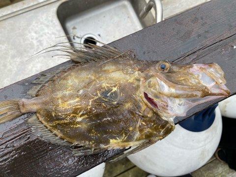 Nyleg skreiv vi om kameratane Bastian Eikeland og Gaute Sørensen som fekk sanktpetersfisk i garn utanfor Valen. Denne fisken var sjeldan for 10-15 år sidan, men er no meir vanleg, ifølgje Havforskningsinstituttet.