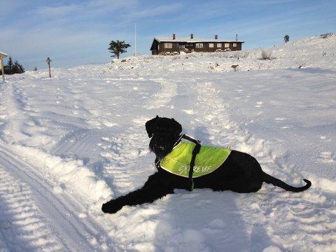PASS PÅ DYRA: Ta med klær til hunden om du skal på skitur i kulda. Her er Oscar på Blefjell. FOTO: JAN STORFOSSEN.