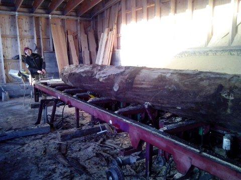 Her er tømmerstokken klar til å deles.