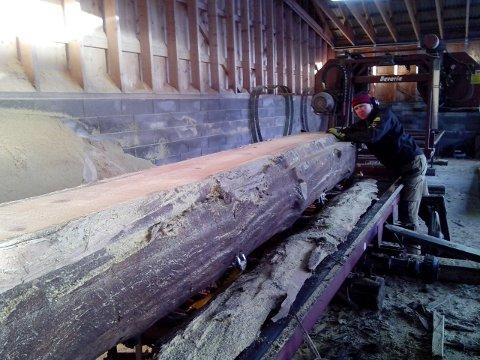 SPENT: Her er tømmeret akkurat tatt opp av myra og skal deles opp.  Geir Prestegården er spent på hvordan det endelige resultatet ville bli.