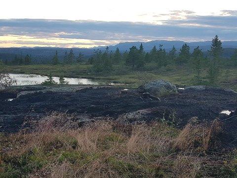 SKOGBRANN: Det brant i cirka to mål i terrenget på Blefjell 24. juli.