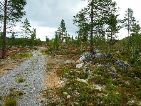 BYGGER HYTTER: 13 nye hyttetomter er planlagt i Smådøl. Foto: Nore og Uvdal kommune.