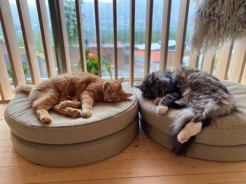 SAVNET: Matmor forteller at også Felix, den grå katten, er litt i stuss over at Findus er borte.