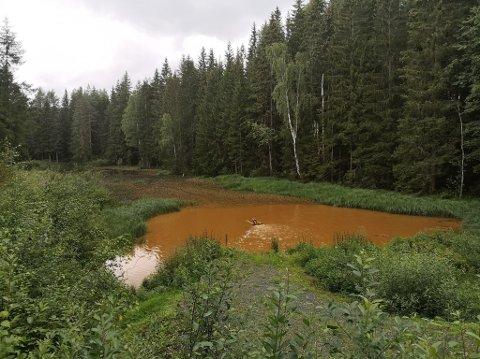 Ber om svar: Solrun Asp Ormaasen vil gjerne vite hvorfor dammen i skogen nedenfor Røysa er helt brun, og om vannet er forurenset og skadelig for dyr og fugler i området. (Bildet er tatt tirsdag).