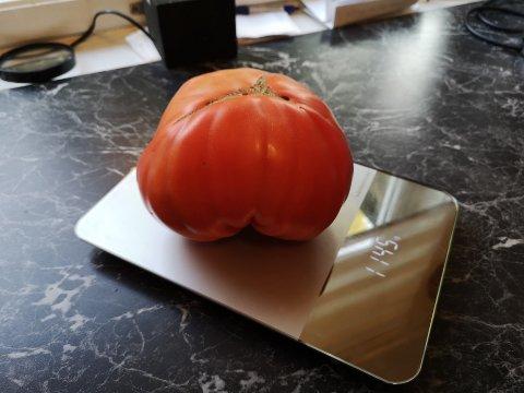 STOR: Som rød tomat veier den «bare» 1.145 gram.