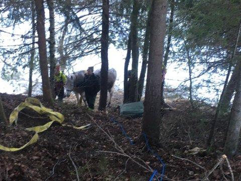 FIKK HJELP: Hesten fikk hjelp til å komme seg opp skrenten igjen.