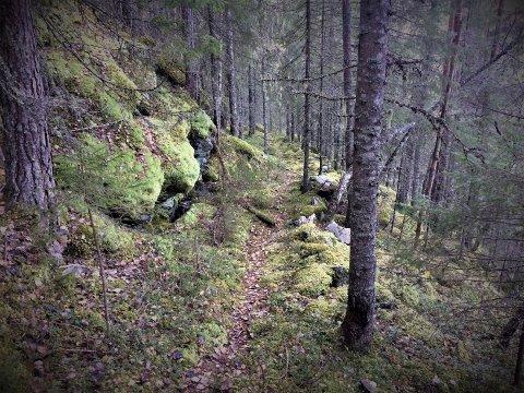 LAKTERVEG: Det er seks slike vegar inn i juva ovanfor Rollag prestegard.