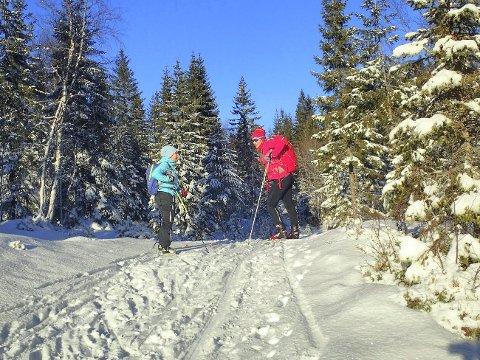 VINTERIDYLL: I skiløypa mellom Svarthavna og Langvann i Finnemarka, søndag 15. januar.