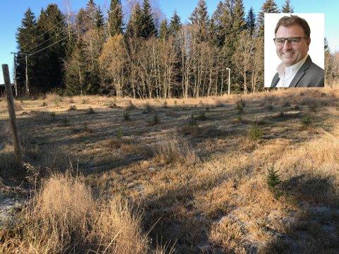 MÅ RIVE OPP TRÆRNE: De 80 grantrærne Morten Brenden (innfeldt) plantet for halvannet år siden får ikke bli stående. Dermed blir de aldri til juletrær.