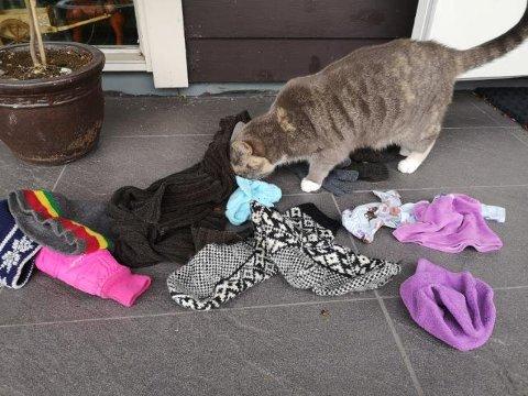 TYVEN: Katten Bonnie med noe av det han ukentlig henter hjem.