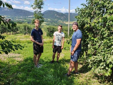 Super sommerjobb: Alexander Bolte, Sverre Strand og Kristian Brurberg hadde gitt opp håpet om å få seg sommerjobb. Så dukket det opp en stillingsannonse fra Buttedal gård.