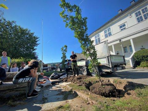 Søyleeik: Sjuendeklassinger ved Hegg skole var med og plantet de to nye trærne foran Haugestad.