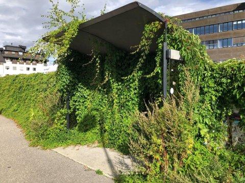 GJENGRODD: Det ser mer ut som en jungel enn en bussholdeplass midt i sentrum.