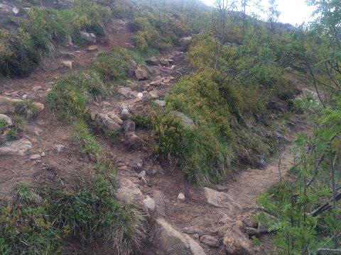 Stien opp til Tjeldbergtind deler seg i flere løp. Det skjer kanskje når folk velger en alternativ vei for når den opprinnelige stien er gjørmete.