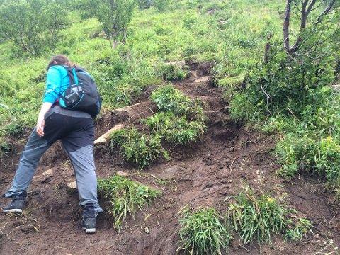 Mange vil på tur i Lofot-fjellene, og da blir det seende slik ut enkelte steder. Når det regner, blir stiene til elver.