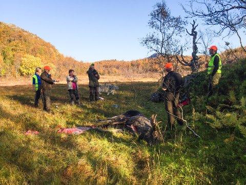 VARMT: Framnesvika på Store-Molla 30. september, elgfall i 20 graders varme. Fra venstre ser vi Gerd Nilsen, Paul Bernt Knaplund, Vibeke Galtung, Jostein Nilsen, elgoksen (220 kg slaktevekt, som er 55 % av levendevekt), Trond Standal (skytter) og Jan Steinar Johansen.