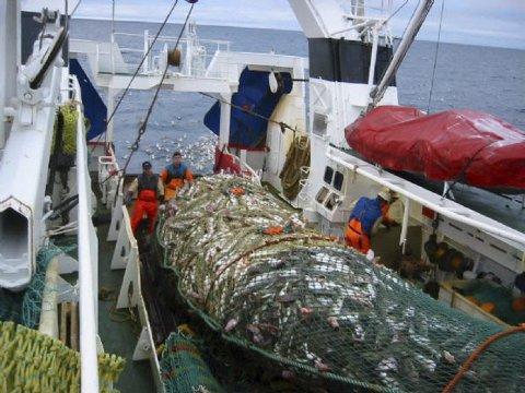 BØTER: Trålere som ikke overholder leveringsplikten risikerer nå tre millioner i bøter. ILL.foto: Havforskningsinstituttet