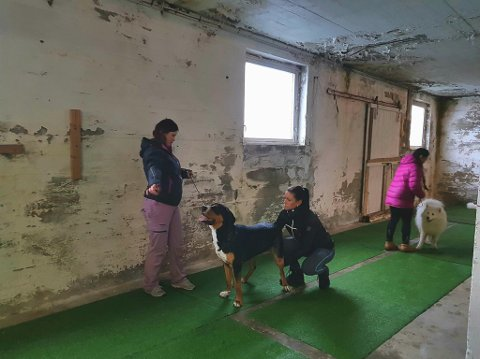 Vågan Hundeklubb satt stor pris på pengene fra Cetho Eiendom.