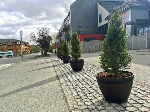 Eviggrønne planter sørger for at det ikke parkeres over alt utenfor Leknes bo- og servicesenter.