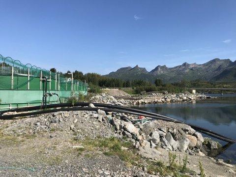 Rømte: Her ved Framnessmolt rømte det i juli  20.000 settefisk av laks. Foto: Fiskeridirektoratet