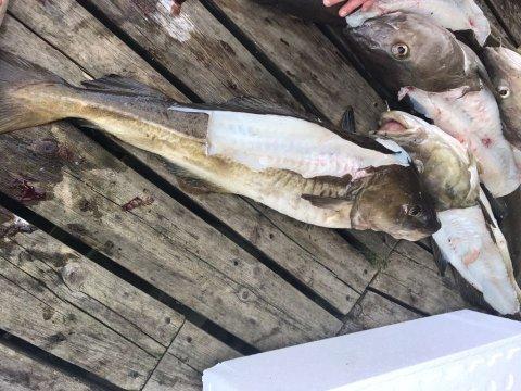 TURISTFISKE: Mange turistfiskere sikrer seg loinsen, og dumper resten. Bildet er tatt ved et anlegg i Lofoten.