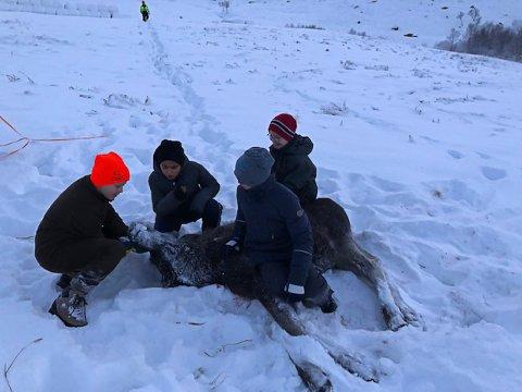 FELLING: Elevene Emil, Amir, Sander og Joakim syns det var stort stas å være med på elgjakt.