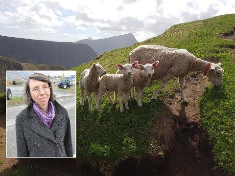 Alvorlig: Solveig Utvik i Lofoten Bondelag peker på at det er alvorlig med helikoptervirksomhet med tanke på beitedyrene.