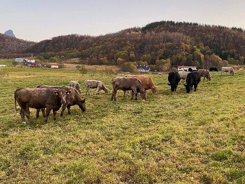 Rammet: Steigen og Hamarøy er blant områdene som er rammet av mangelen på veterinærer.