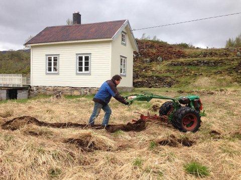 Arbeidshest: Torbjørn Ollestad forteller at tohjulstraktoren er et fantastisk redskap når det skal drives nybrottsarbeid, noe som har resultert i blant annet potetland.