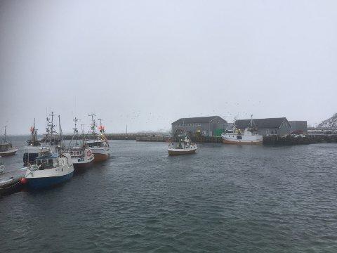 Steinfjorden sjømat på Eggum.