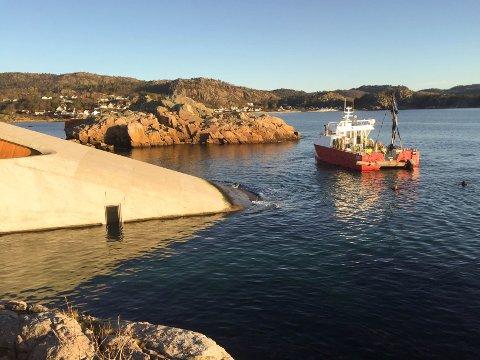 BÅLY: I dag ble Brevik-søylene senket ned i havet ved Under. Stig Ubostad (i vannet) fulgte kunstverket til bunns.