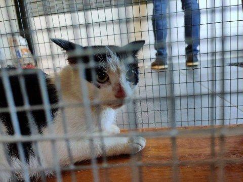 Ingen vet hvor gammel hun er eller hvor hun kommer fra. Lady Celina er en av mange katteskjebner som ikke får oppleve et trygt og godt hjem.