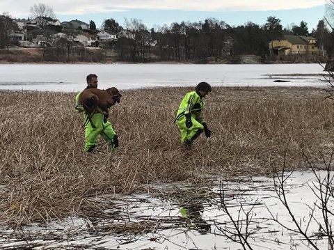 Brannkonstablene Christian Bernhoff-Jamt og Oscar Medel Agustin ved MIB interkommunale brann- og redning sørget for at hunden kom seg trygt inn til land.