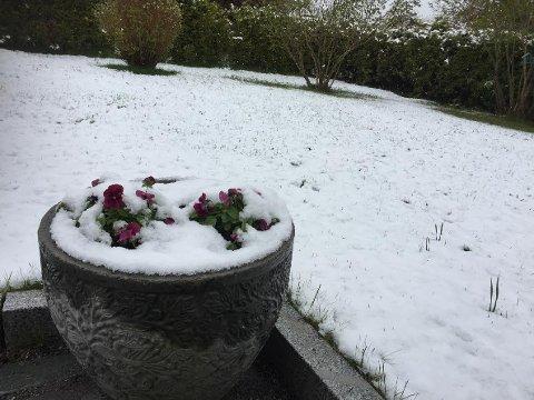 Kalenderen viser 10. mai, og overraskelsen var stor da bakken var hvit av snø i dag morges.