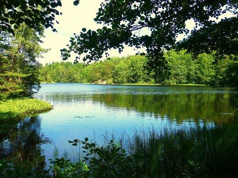 Molbekk: Det idylliske tjernet på Mosseskogen brukes blant annet av elevene på Åvangen skole og er et godt eksempel på et turdrag nær bebyggelsen.