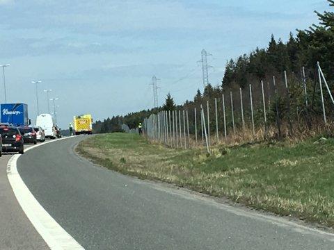 Det ble lange køer på E6 da mannskapene fra Viltnemnda og MIB Rygge jobbet med å få rådyret på riktig side av viltgjerdet. Bildet er tatt ved 11.40-tiden søndag.