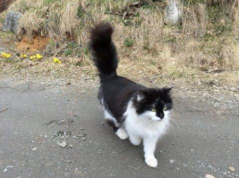 KJÆLEDYR: Hvert år kommer mange katter bort fra hjemmene sine. ID-merking vil gjøre det lettere å gjenforene eier og kjæledyr. Her er katten Nala, og hun er chipmerket.