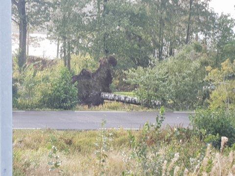 SON: Moss Avis fikk inn flere meldinger om trær over veien også i Son. Dette er fra Brevik.