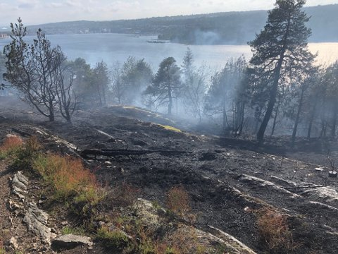 SKOGBRANN: Et område på flere hundre meter ble et offer for flammene på Røysåsen mandag.