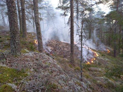 ADVARER: Det er sendt ut gult farevarsel om skogbrannfare i mossedistriktet. Bildet er fra skogbrannen ved Vanem 30. august.