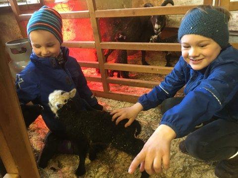 EN AV MANGE: Ole Herman og Jens Fredrik Randem sammen med ett av de mange lammene som ble født på Grorud gård i Hølen i løpet av påsken.