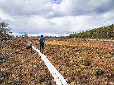 VANDRING I NASJONALPARKENE: Langs myrene inn mot Lierne nasjonalpark er klopplagt.