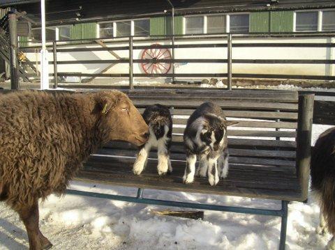 EKT: Hos rideskolen og husdyrparken på Ekebergsletta kan du klappe dyr eller lære deg å ri. (Arkivfoto)