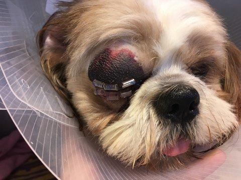 MEDISINER: Da Miro kom hjem fra dyrehospitalet første gangen fikk matmor Heidi Bjerkan Nagy med seg øyedroper som skulle gis annenhver time.