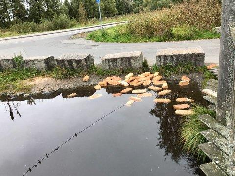 DUMPING: Slik så det ut tidlig denne uken ved Østensjøvannet, like ved P-plassen, der store mengder hele brød har blitt dumpet.
